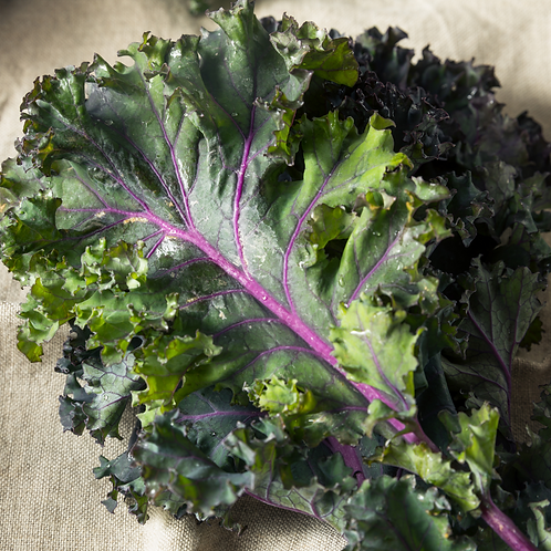 Kale, Red, Bunch