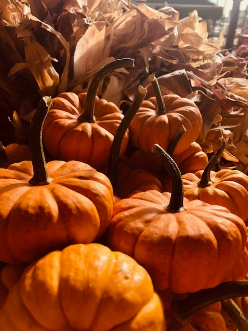 Pumpkins mini,  (Each)