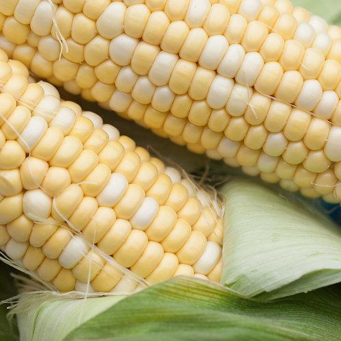 Corn, 4 Pack