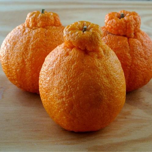Mandarins, Sumo (Lb)