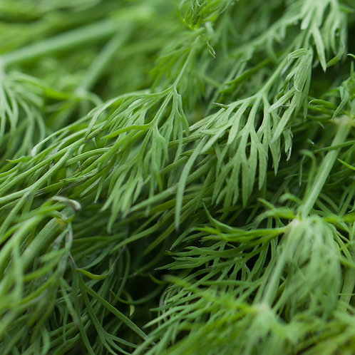 Dill, Baby, Bunch