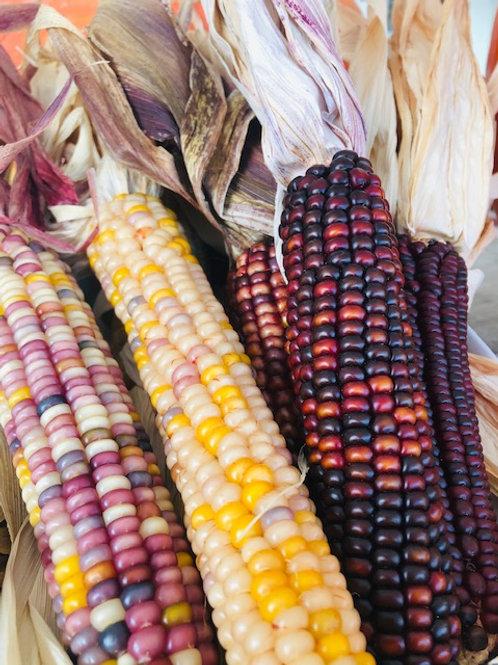 Ornamental Corn,  (Each)
