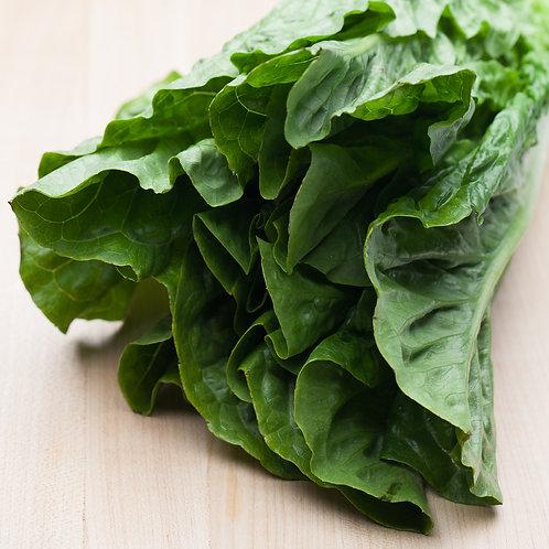 Lettuce, Romaine (Each)