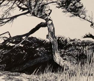 Jo Reitze 'Windswept Trees'