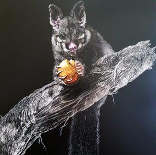 Jan Lowe 'Bushtail Possum'