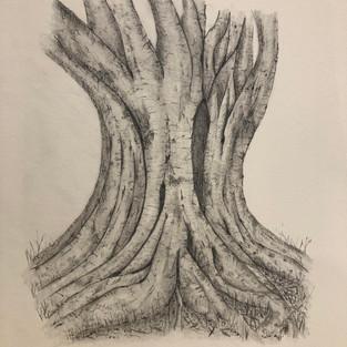Kay Bellis 'Tree of Knowlege'