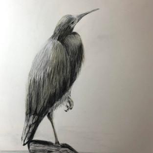 Donna Mitchell 'Winter - Faced Heron'