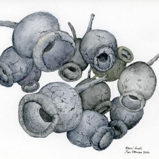 Jan Pittman 'Marri Fruits'