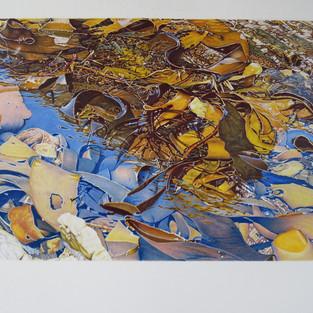 Geoff Sargeant 'Cape Liptrap Sea Wrack - Bull Kelp a Climate Casualty.'
