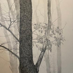 Danielle Robertson 'Foggy Morning'