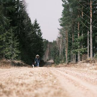 Promenade hors du temps le long d'une piste forestière