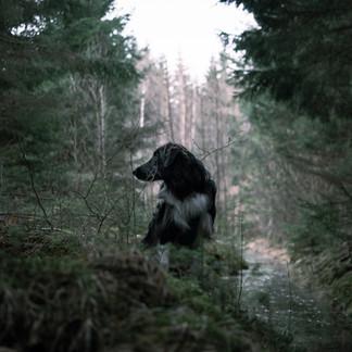 L'appel de la forêt ?