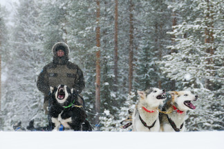 Nico, un super voyageur lors d'ue expédition en chien de traineaux