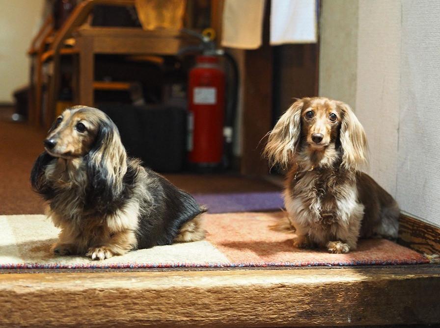 長女のプティー(左)と次女のアリスです。玄関までお出迎えにくることもありますよ。