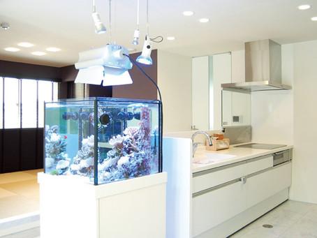 キッチンからもリビングからも眺められる!癒しの大型アクアリウム水槽が象徴の家。