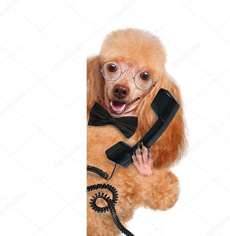 dog phone.jpg