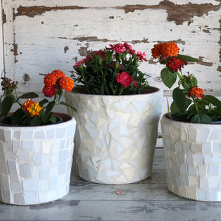 White Flower Pots