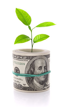 shutterstock_87692731- MONEY TREE.jpg