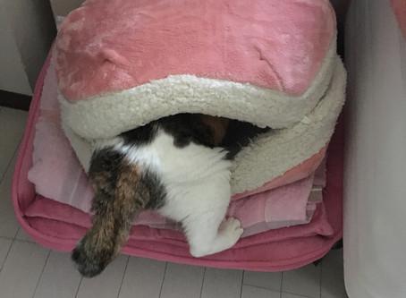 2月22日は猫の日です