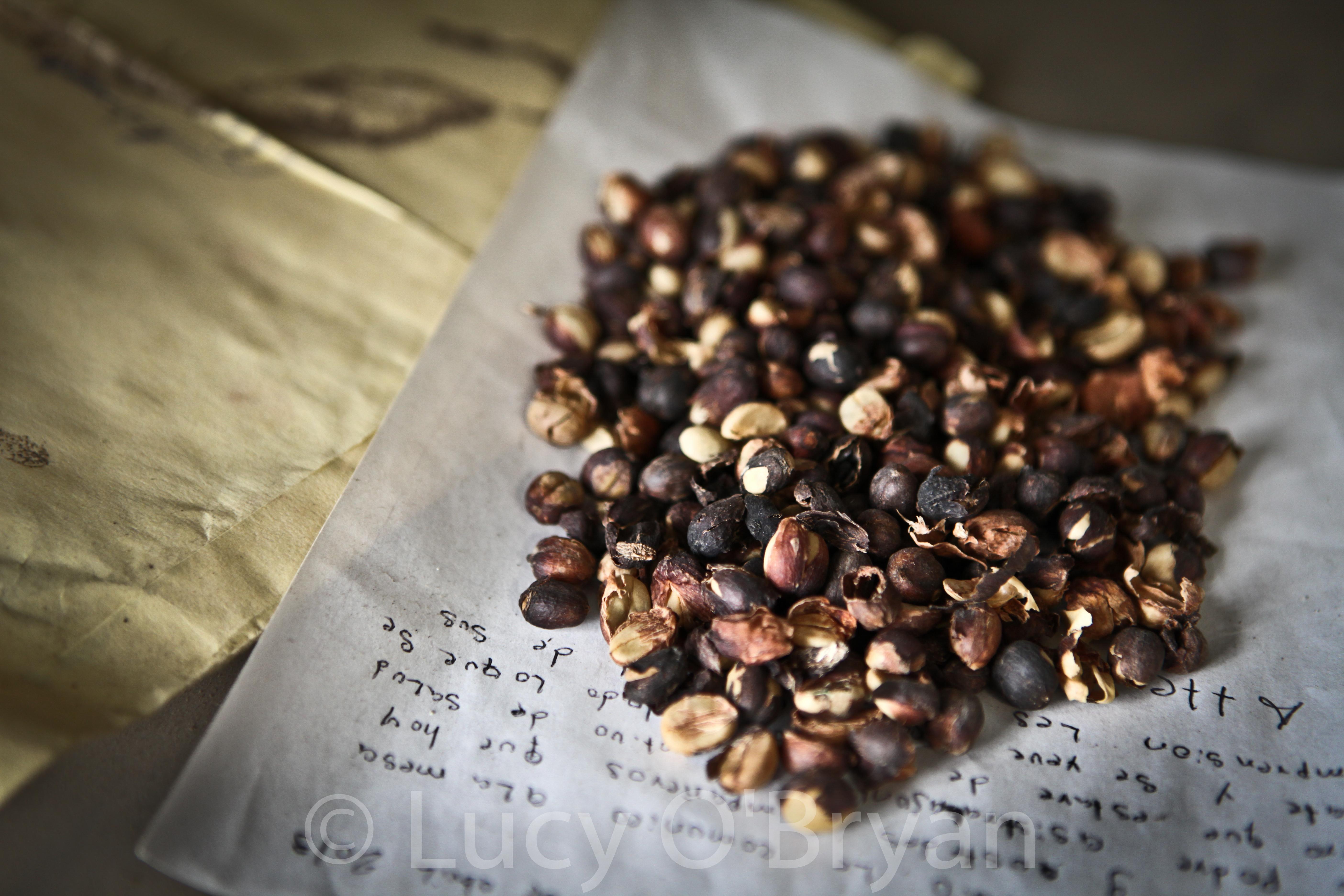 Coffee beans Chiapas