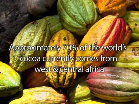 World Cocoa