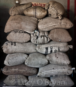 Bags of Dried Cacao Beans