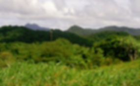 Natur auf Dominica