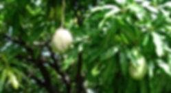 Pflanzen Dominica