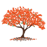 Poinciana Tree.png