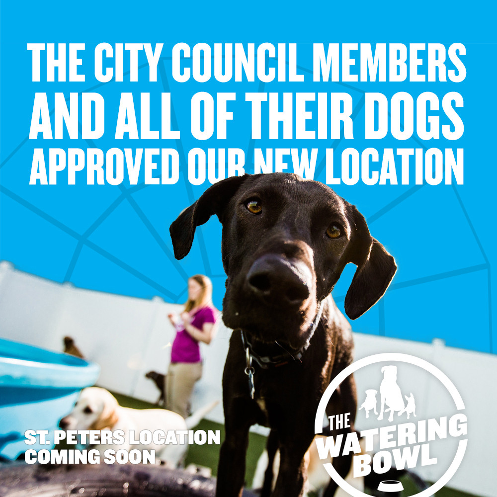 Graphic - City Council.jpg
