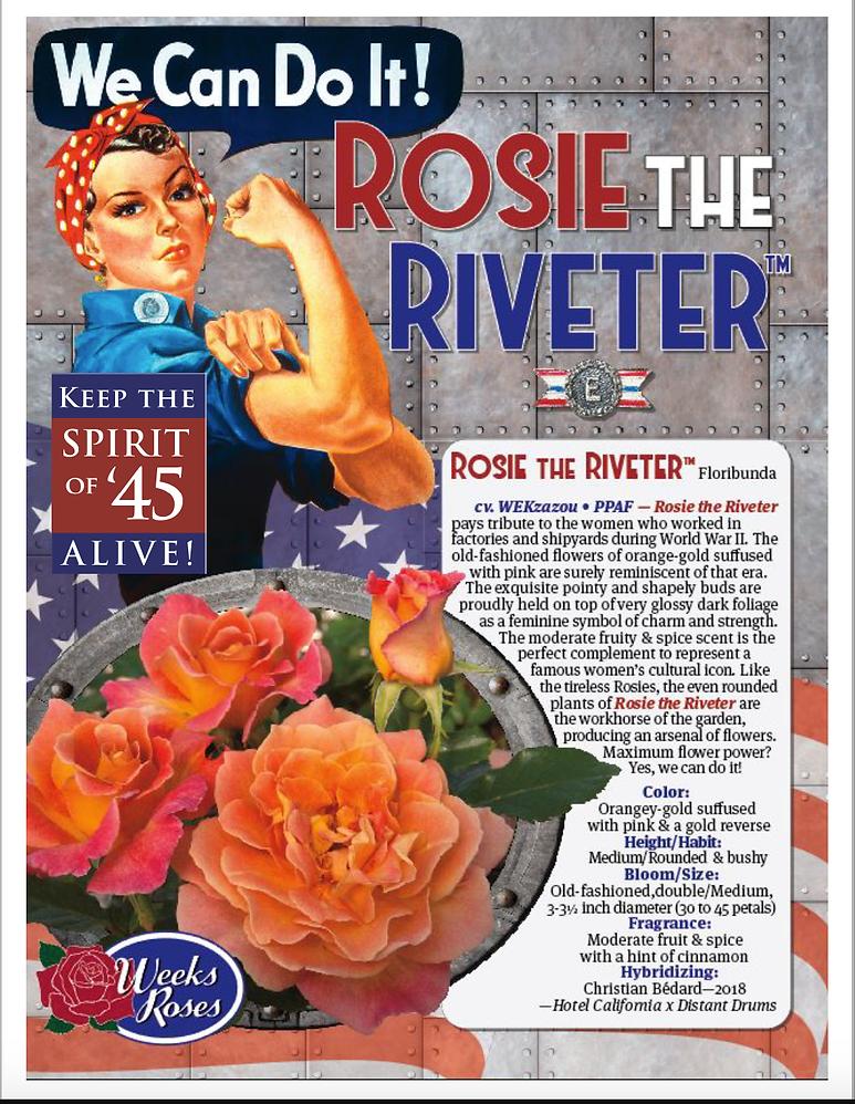 Rosie Rosie Brochure.png