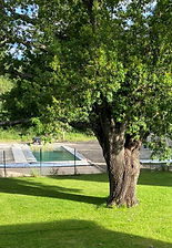 photo bassin naturel 2 (2).jpg