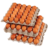 brown-chicken-eggs-flats.png
