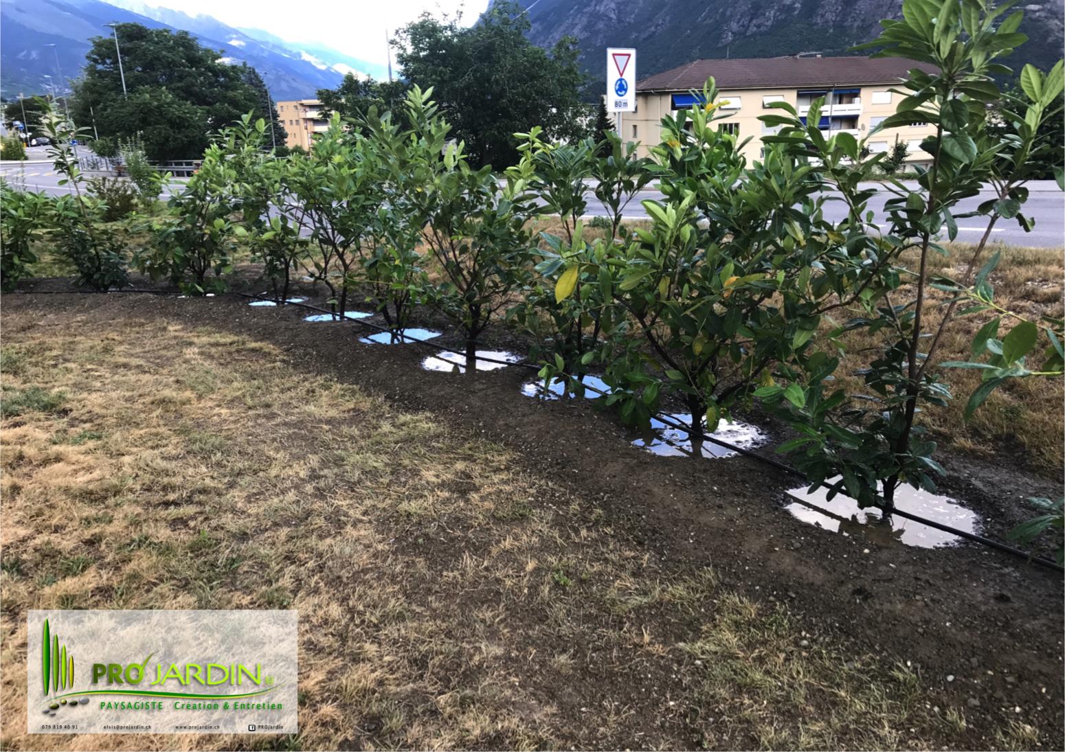 Plantations___haie_Lauriers___Prunus___Laurelles___Traveaux_paysagèrs_Maçonneries__PROjardin_Paysagi