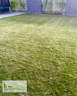 Scarification croisé de pelouse