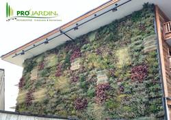 Fassade plantes grasses