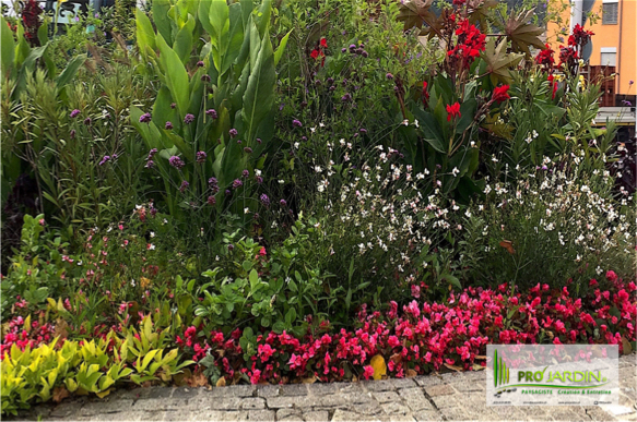 PROjardin Paysagiste creations & enretiensn Espace vert Jardins Valais Sierre fleurs annuelles massi