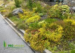 Plantes grasses, herbes graminées, vivace