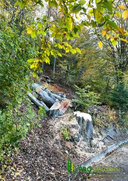 Abattage des arbres dangeureaux