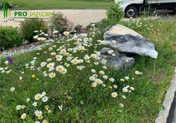 Prairie_fleurie_précultivé_Terrasse_dall