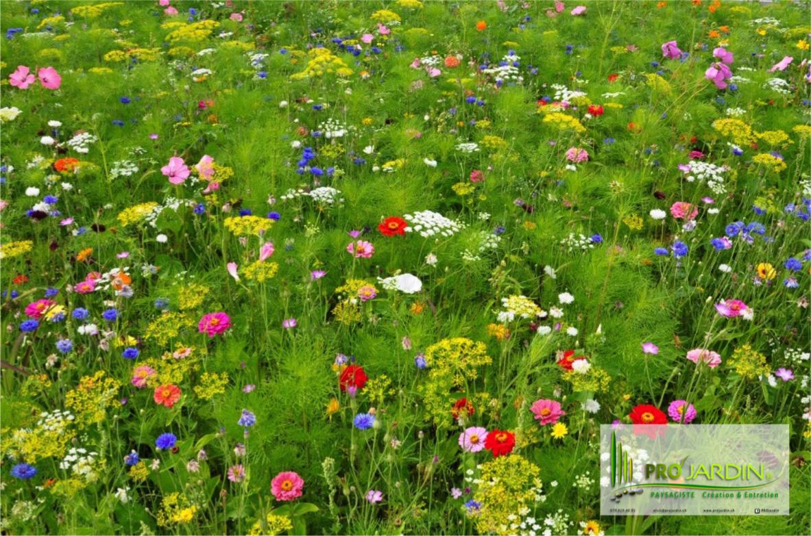 Prairie fleurie de la plaine PROjardin Paysagiste creations & enretiensn Espace vert Jardins Contrat