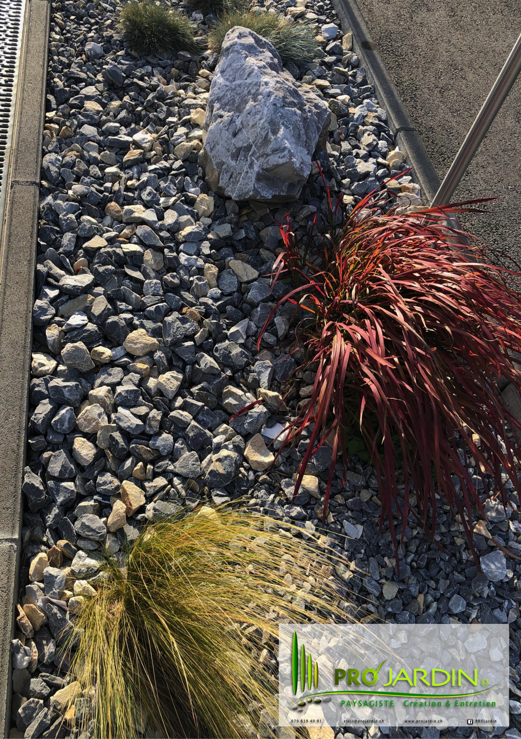 plate-bande zen _ herbes Carex et Cordyl