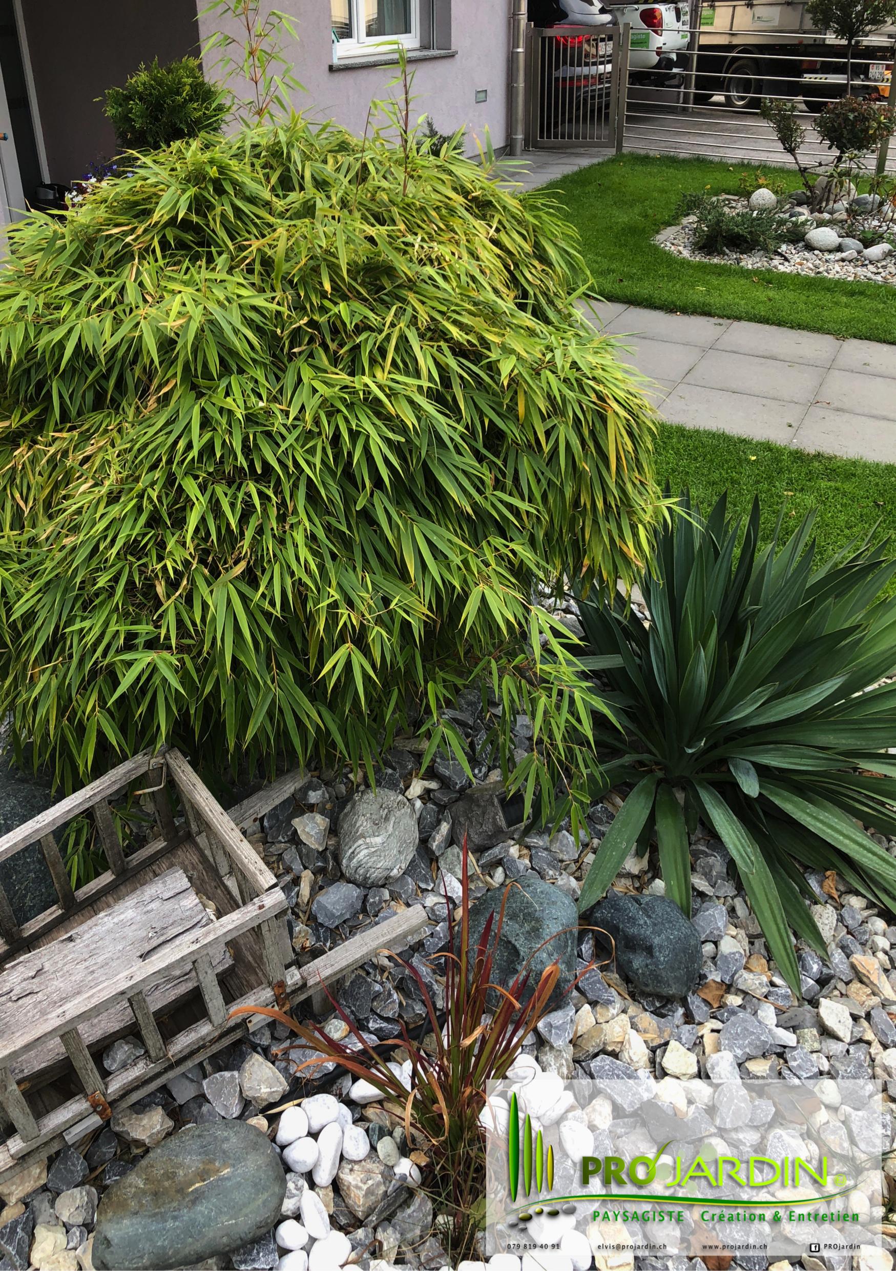 massif zen _ Yucca _ Bambous nain