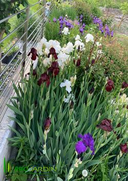 Jardin_plantes_vivaces_Traveaux_paysagèr