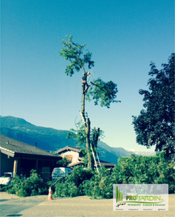 Professionnelle_Tonte_gazon_Fauchages_Scarification_Taille_Elagages_Abattage_arbres_Nettoyage_Débarr
