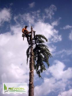 Demontage_abattage_d'arbres_Traveaux_paysagèrs_Maçonneries__PROjardin_Paysagiste_créations_&_enretie