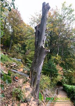 Traveaux_forestiers_PROjardin_Paysagiste