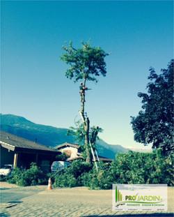 Démontage_Conthey_Tonte_gazon_Fauchages_Scarification_Taille_Elagages_Abattage_arbres_Nettoya