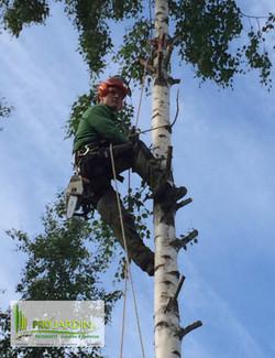 Tronçonneuse_Stihl_Tonte_gazon_Fauchages_Scarification_Elagages_Abattage_arbres_Nettoyage_Débarras_D