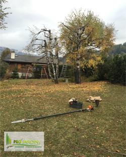 Rabattage des arbres envahissant